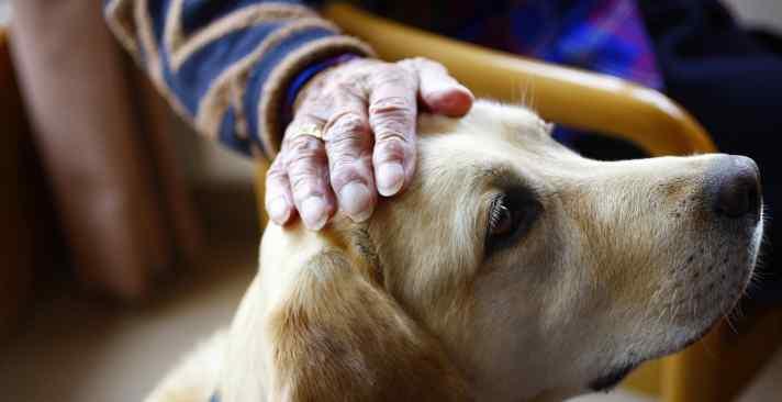 Tertianum Wohn- und Pflegezentrum Bärholz, Selbständigkeit im Alter, Therapie mit Tieren für Senioren